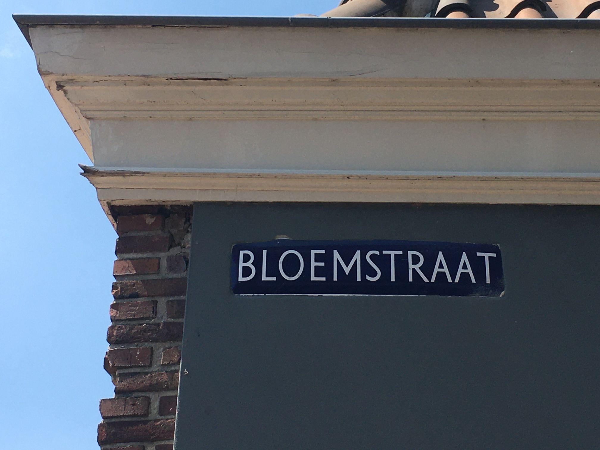 Tijs Blom from Alkmaar